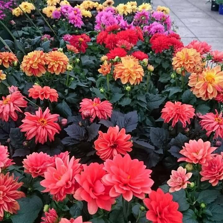 Altnagelvin Garden Centre Flowers