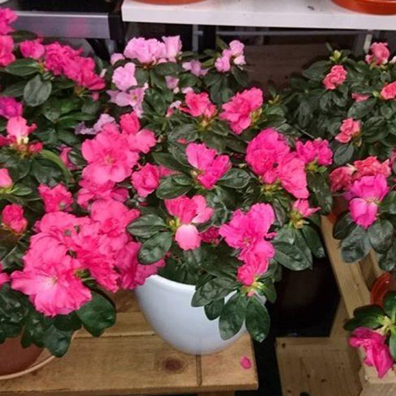 Altnagelvin Garden Centre Plants