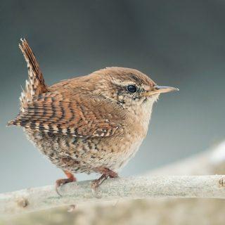 Altnagelvin Garden Centre Birds
